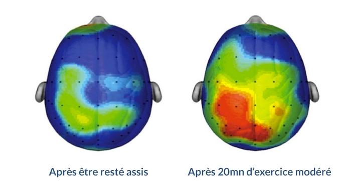 effets positifs de l'activité sur le cerveau
